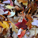 4 Ways To Make Extra Money This Fall