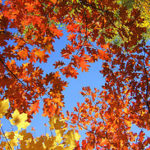 Fall Expenses That May Pop Up In Your Budget